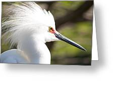 Snowy Egret Closeup Greeting Card