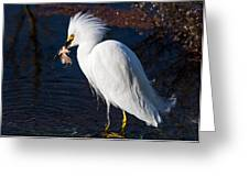 Snowy Egret Eating Fish Greeting Card