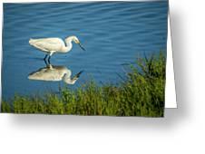 Snowy Egret Feeding  Greeting Card