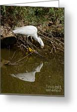 Snowy Egret Fishing From Branches Greeting Card