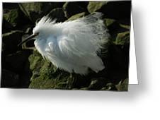 Snowy Egret Fluffy Greeting Card