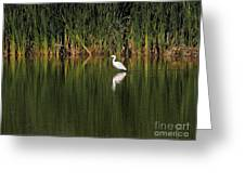 Snowy Egret In Marsh Reinterpreted Greeting Card