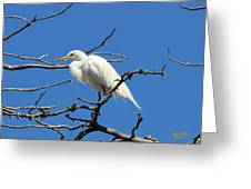 Snowy Egret In Nesting Area Greeting Card