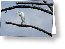 Snowy Egret In Plume Greeting Card