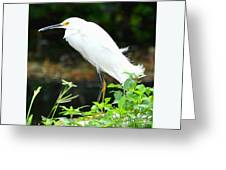 Snowy Egret In The Everglades Greeting Card
