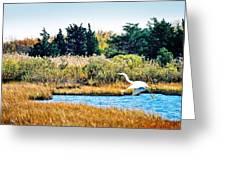 Snowy Egret-island Beach State Park N.j. Greeting Card