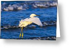 Snowy Egret Lands In Surf Greeting Card