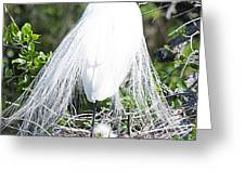 Snowy Egret Mom And Chick Greeting Card