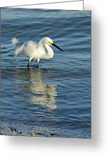 Snowy Egret On The Hunt II Greeting Card