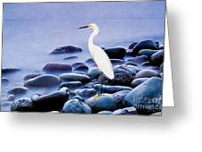 Snowy Egret On The Rocks Greeting Card