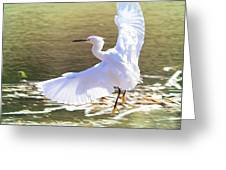 Snowy Egret Over Golden Pond Greeting Card