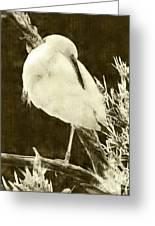 Snowy Egret Portrait Greeting Card