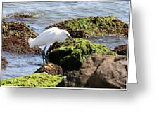 Snowy Egret  Series 2  1 Of 3  The Catch Greeting Card