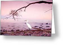 Snowy Egret Solitude Greeting Card