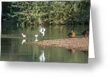 Snowy Egret Stretch 4280-080917-1 Greeting Card