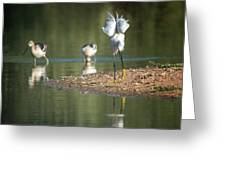Snowy Egret Stretch 4280-080917-2cr Greeting Card