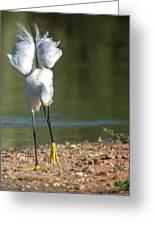 Snowy Egret Stretch 4280-080917-3cr Greeting Card