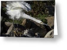 Snowy Egret Stretch Greeting Card