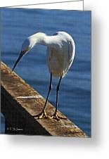 Snowy Egret That Minnow Will Be Fine Greeting Card