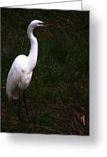 Snowy Egret View 3 Greeting Card