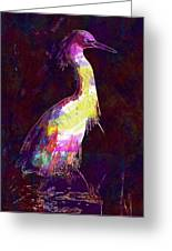 Snowy Egret Waterfowl Bird Large  Greeting Card