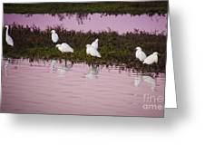 Snowy Egrets At Sunset Greeting Card