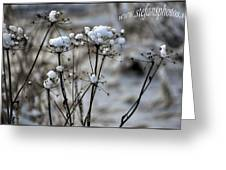 Snowy Flowers  Greeting Card