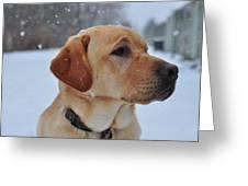 Snowy Golden Lab Greeting Card