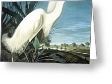 Snowy Heron Greeting Card