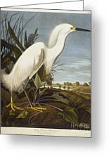 Snowy Heron Greeting Card by John James Audubon