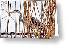 Snowy Heron? Greeting Card