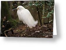 Snowy In The Marsh Greeting Card