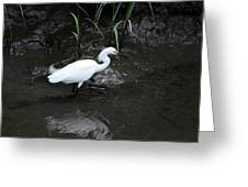 Snowy In The Mud Greeting Card