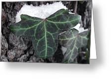 Snowy Ivy Greeting Card
