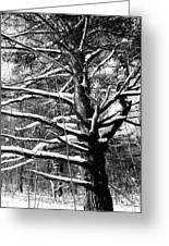 Snowy Limbs Greeting Card