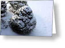 Snowy Morn Greeting Card