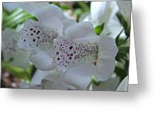 Snowy Mountain Digitalis Greeting Card