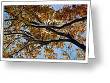 Snowy Oak Greeting Card