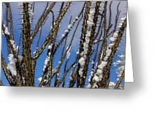 Snowy Ocotillo Sky Greeting Card