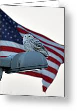 Snowy Owl And Am Flag Greeting Card