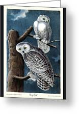 Snowy Owl Audubon Birds Of America 1st Edition 1840 Royal Octavo Plate 28 Greeting Card