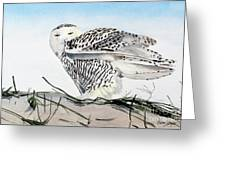 Snowy Owl Greeting Card