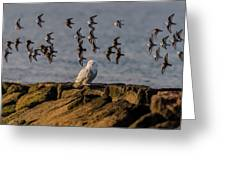 Snowy Owl On A Jetty Greeting Card