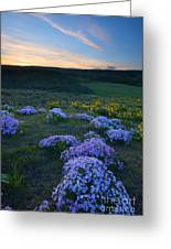 Snowy Phlox Sunset Greeting Card