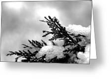 Snowy Pine Branch Greeting Card