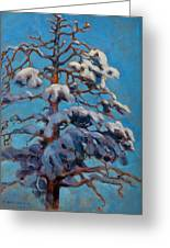 Snowy Pine-tree Greeting Card