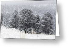 Snowy Pines In The Pike National Forest Greeting Card