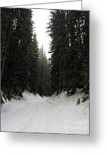 Snowy Pines Greeting Card by Silvie Kendall