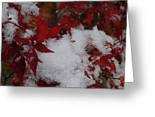 Snowy Red Maple Greeting Card