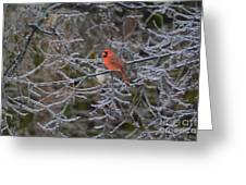 Snowy Red  Greeting Card